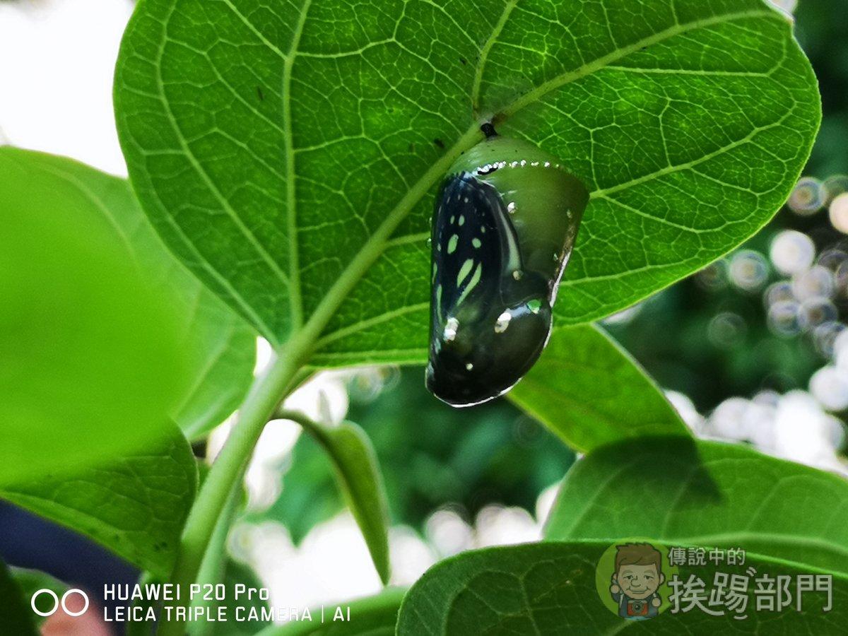 HUAWEI P20 Pro 昆蟲攝影