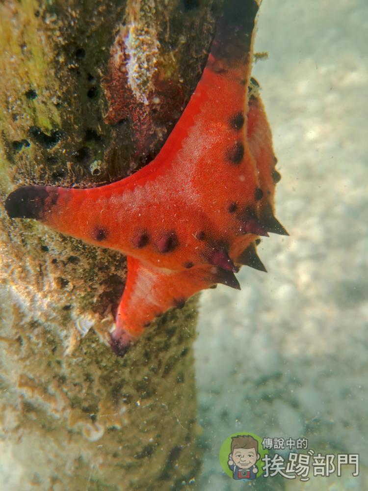 HUAWEI Mate 20 Pro 潛水保護殼