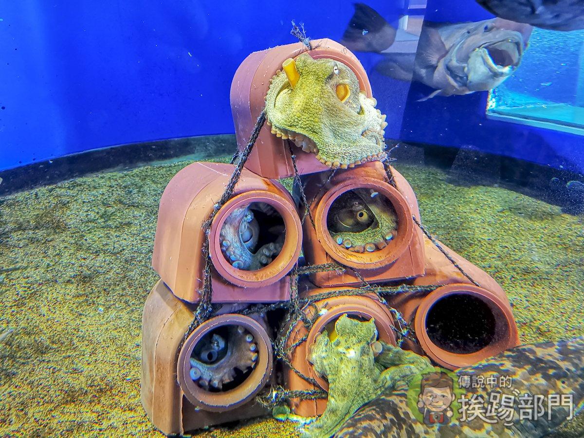 茨城大洗水族館
